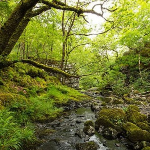 Planning protection for ancient woods